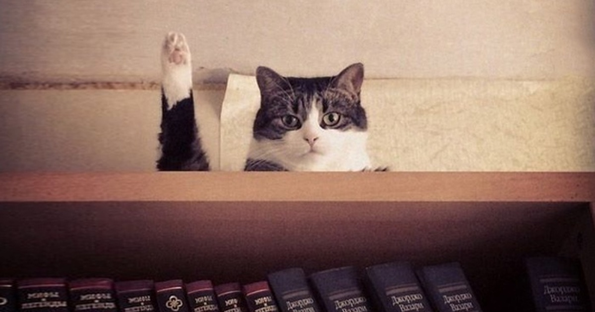 17 cats immortalized at the right time