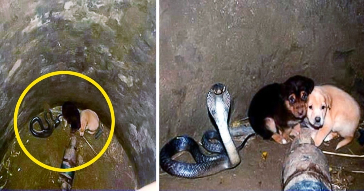 Two puppies fall into a well and find themselves facing a cobra, no one could have imagined what happened next