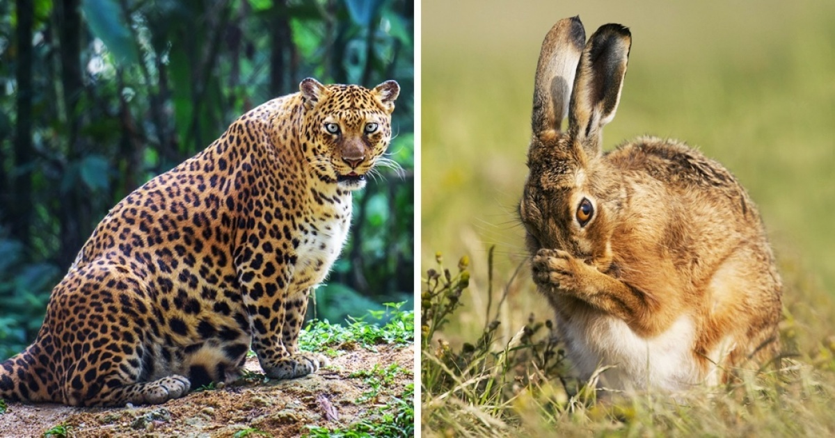 15 absolutely gorgeous future animal moms
