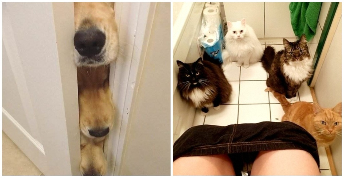 22 photos that show how your pets sometimes have no respect for you