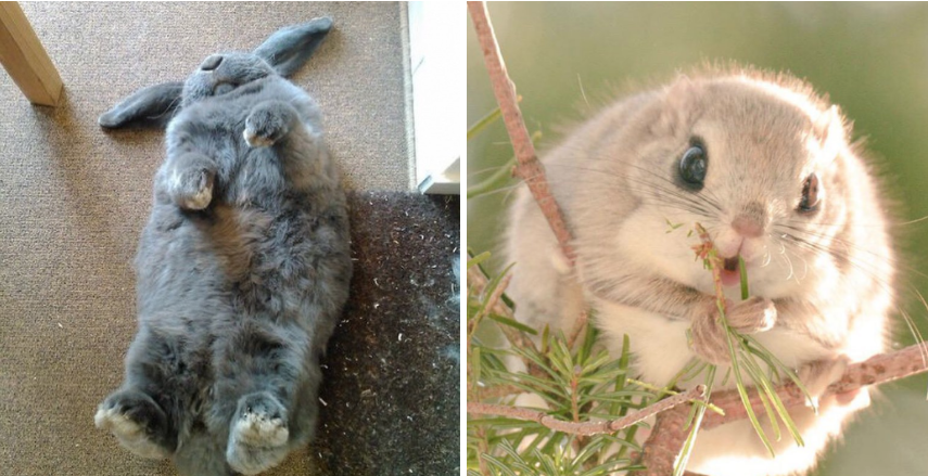 These 19 adorable animals will make you fall in love