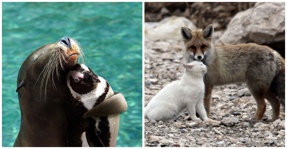 Unlikely friendships do exist, the proof in 16 photos