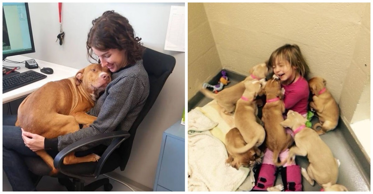 20 funny scenes from the daily life of animal shelters