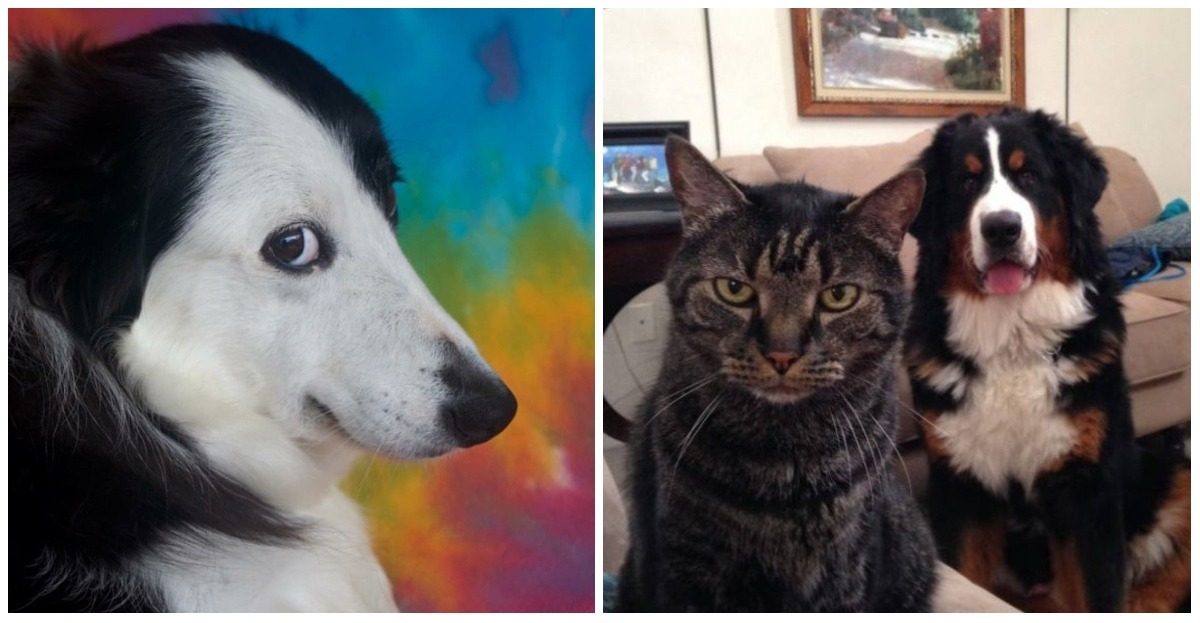 These 18 pets with humanized attitudes