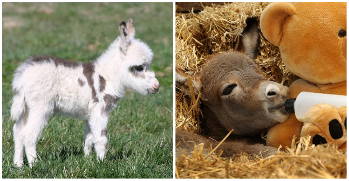 These 19 baby donkeys who crack the net