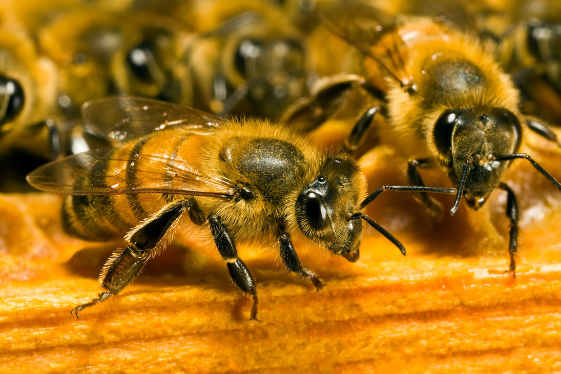 3 pesticides deemed dangerous for bees and banned by the EU