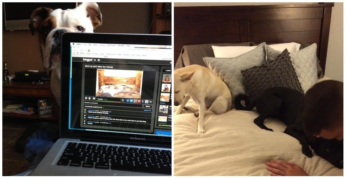 These 13 photos that show that cats and dogs can also be jealous