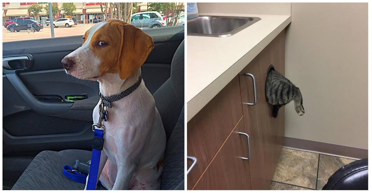 These 28 reactions from animals that go to the vet